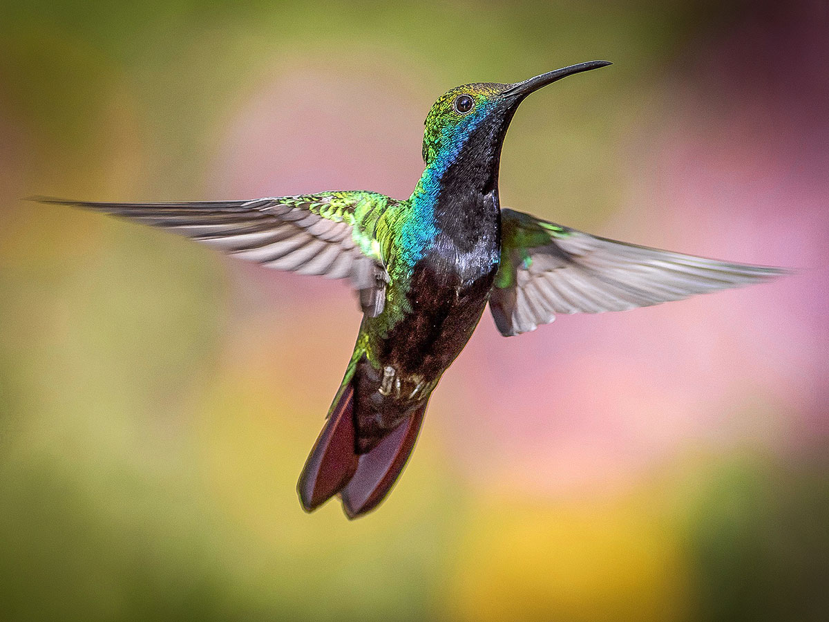 The Hummingbird Personality